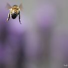 beehind by Hugh McDonnell