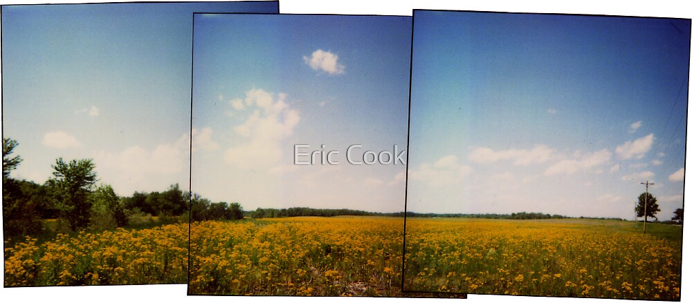 Field North of Murphysboro, IL by Eric Cook