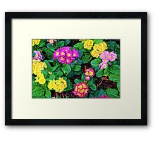 Floral Feast Framed Print