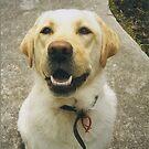 Smile Bess! by Meg Hart