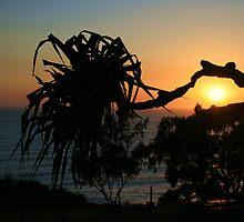 Sunrise Through Pandanas by hans p olsen