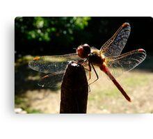 transparent wings Canvas Print