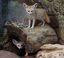 Awesome Fennec Fox by kingdomofanimal