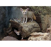 Awesome Fennec Fox Photographic Print