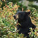Black Bear Munchies by Dennis Jones - CameraView