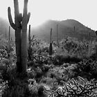 Saguaro Sunrise in b/w by Myrahein