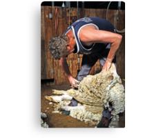 Sheep shearing at Shear Outback Canvas Print