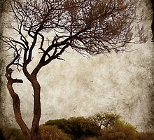 desert tree by Sonia de Macedo-Stewart