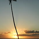 Lone coconut tree by Greg Kolio Taylor