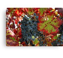 Ca'Bruzzo Vineyard Canvas Print