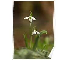 The lonely snowdrop Poster