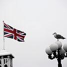 The Bird at Brighton by lukefarrugia