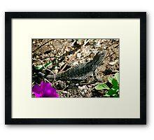 Basking Lizard Framed Print