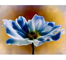 Blue cosmos Photographic Print