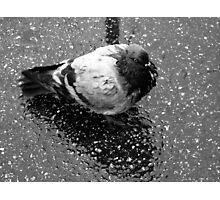 Dove heart Photographic Print