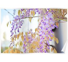 Purple Wisteria Poster