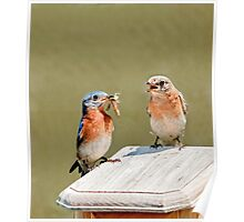 mom and pop bluebird Poster