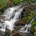 Flow thru the Moss by Ken Lowden