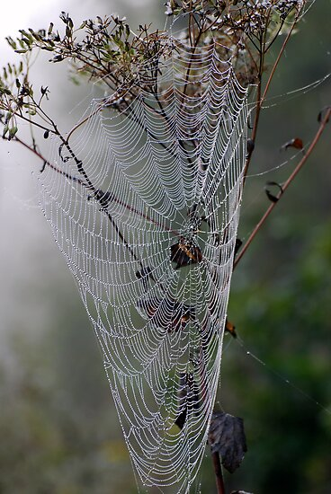 A Jewel of a Spider Web by barnsis