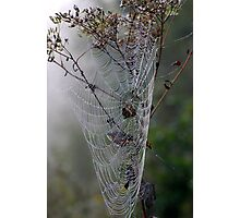 A Jewel of a Spider Web Photographic Print