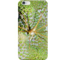 Arrow Crab on Green Star Coral iPhone Case/Skin