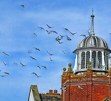 Pigeon Playground 2 ~ Lyme Regis  by Susie Peek