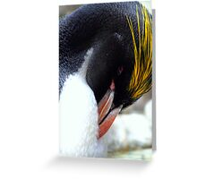 Macaroni Penguin Greeting Card