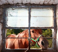 Curious equus by zumi