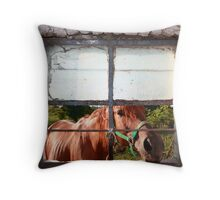 Curious equus Throw Pillow