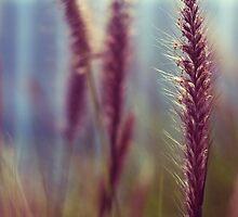 barley by MissBritt