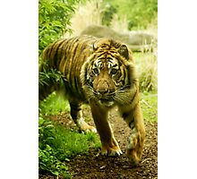 Master of the jungle Photographic Print