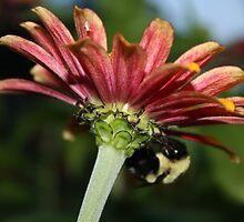 Downside Bee by Devon Stewart