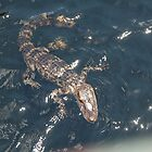 GiGi th Gator 2 by Jessa Munoz-Dorr