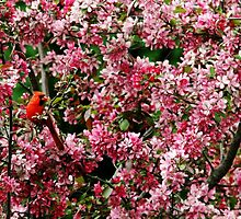 In The Pink by Debbie Oppermann