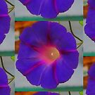 The Purple Morning Glory by Bearie23