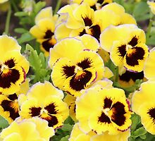 Yellow And Brown Flowers by Cynthia48
