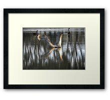Trunks and Swans Framed Print