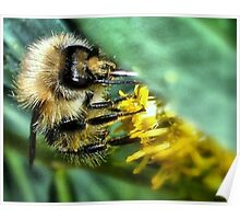 The Pollinator!! Poster