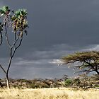 African trees by philippeB