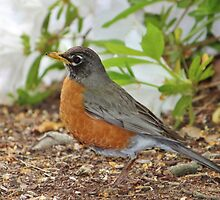 Robin Among The Flowers by Cynthia48