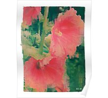 Bold Pink Hollyhocks Poster