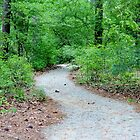 Path Through The Woods by Cynthia48