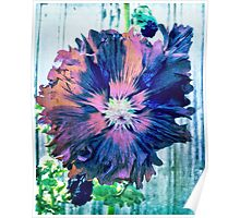 Painted Hollyhock Poster