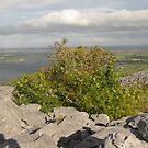 Burren view by John Quinn