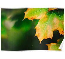 Autumn colours life Poster