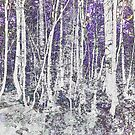 Night silver birches by Sandra O'Connor