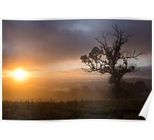 The Foggy Tree Poster