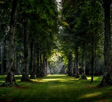 Lime Tree Avenue by greenbunion