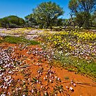 Colourful Outback by Jan Fijolek