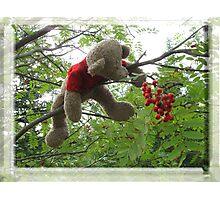 Bear Berries Photographic Print